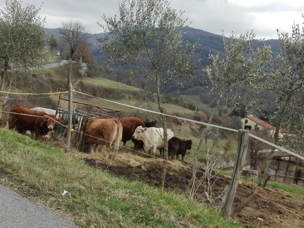 Prati vicino Firenze: Azienda-Agrituristica Val di Sieve