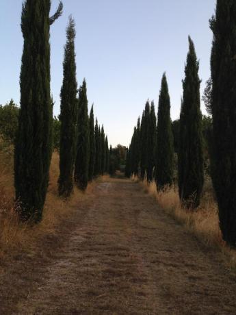 Viale di accesso alla villa vacanze Trevi