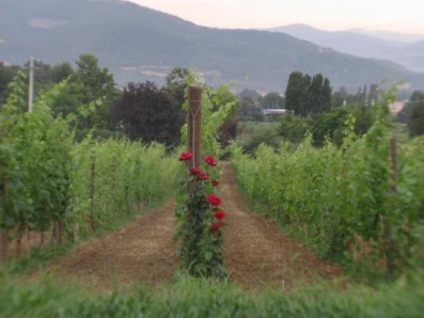 Agriturismo con attività agricola a Umbertide