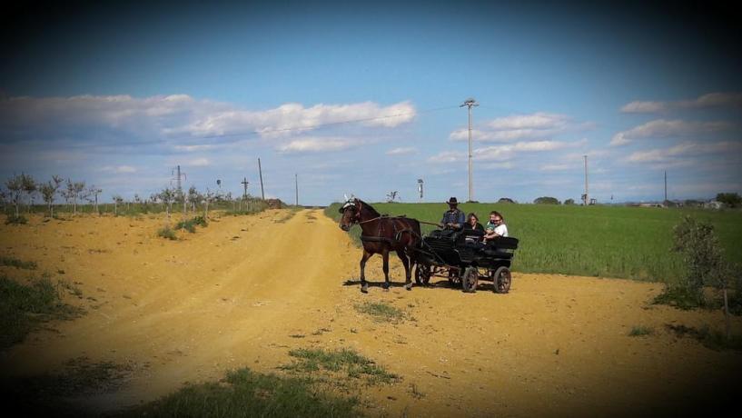 Agriturismo biologico vicino Pisa