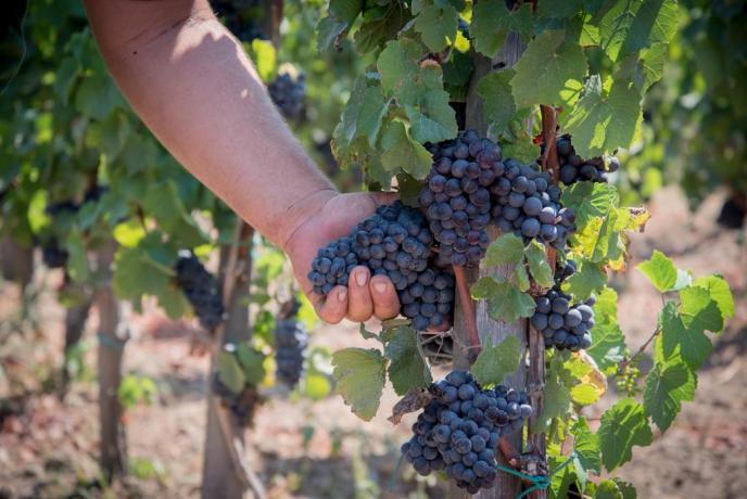 Relais con produzione vino Lipari Sicilia