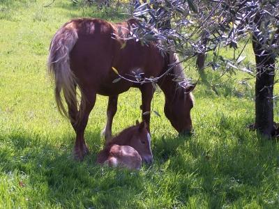 Umbria agriturismo con cavalli