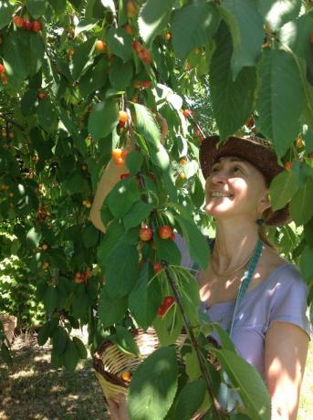 Agriturismo con raccolta prodotti locali a Jesi