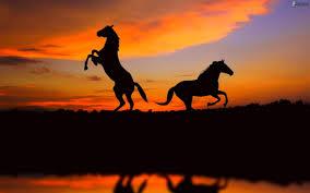 Attivitá a cavallo per grandi e piccoli