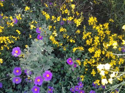 Giardino con fiori e frutta