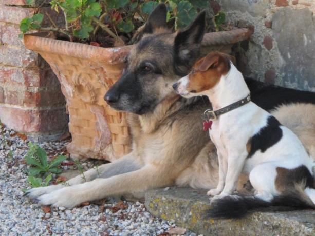 Villa ad Arezzo con animali ammessi