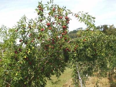 Il frutteto dell'Agriturismo