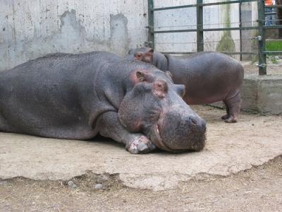 Where to sleep near the Zoo of Pistoia