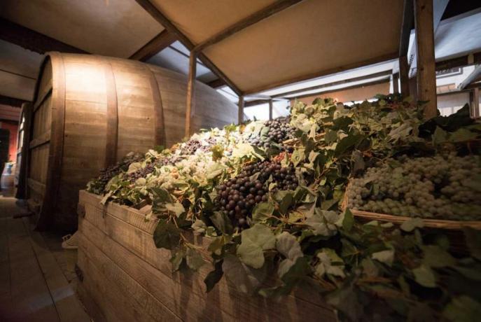 Alta Maremma, Museo del vino, residence con appartamenti