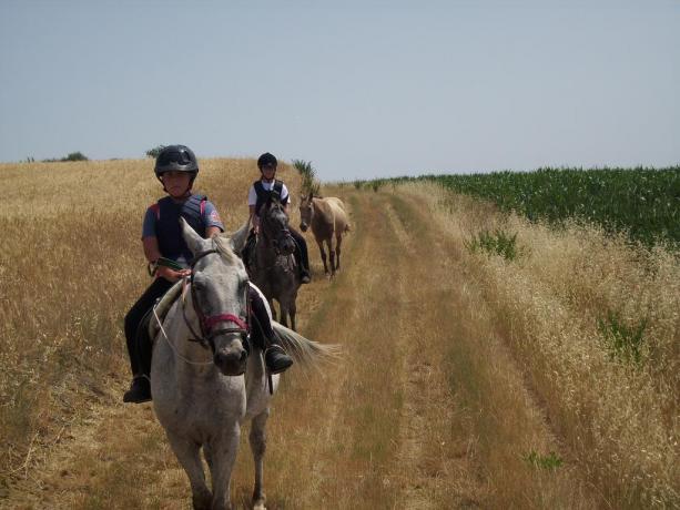 escursioni a cavallo a castiglione del lago