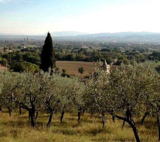 Vista Panoramica su Santa-Maria degli Angeli e Perugia