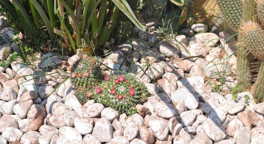 Giardino ben curato con piante