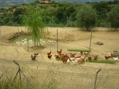 Agriturismo a Città della Pieve con fattoria