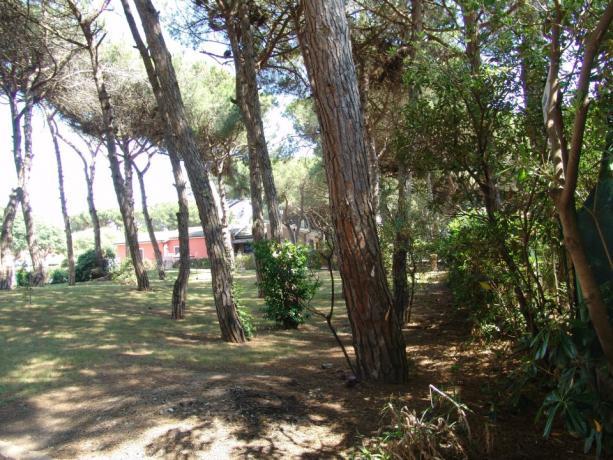 Ampio giardino con pinete