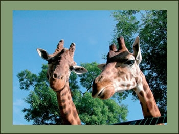 Holidays at the Zoo of Pistoia in Tuscany