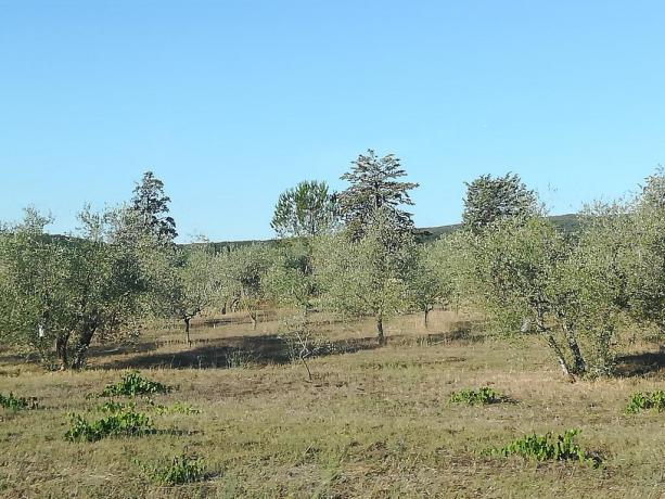 Agriturismo immerso nel verde delle colline Toscane