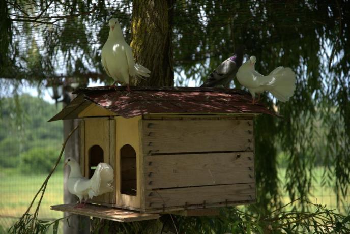 Agrturismo con Animali da cortile