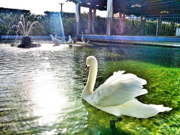 Hotel 4stelle co laghetto per eventi Battipaglia-Salerno