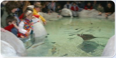 Aquariums with various marine species
