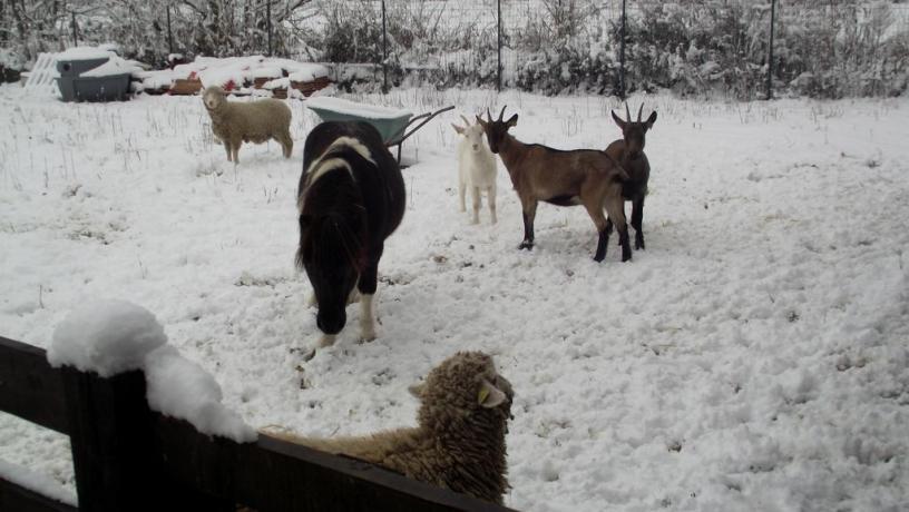 Capre, pecore e pony: Fattoria Didattica Motta de'Conti