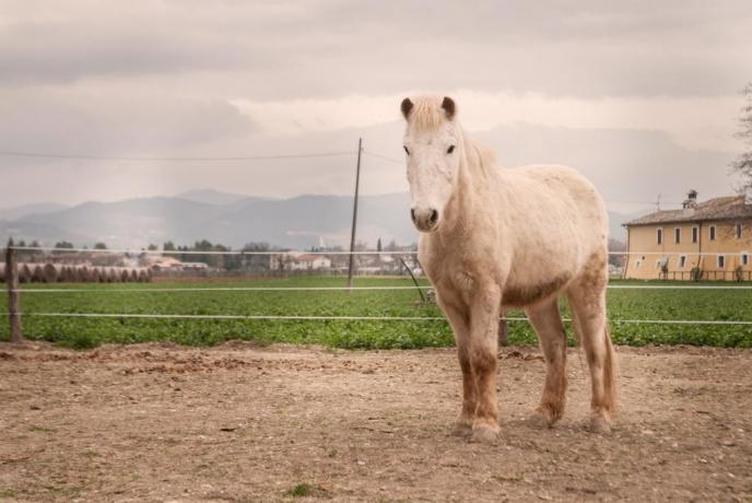 Agriturismo fattoria cavallo vicino Fonti Clitunno
