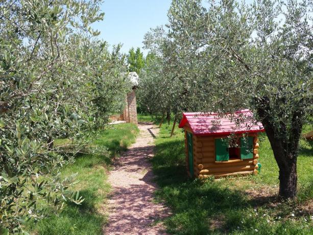 Grande Giardino con Olivi vicino Assisi-Perugia-Bettona