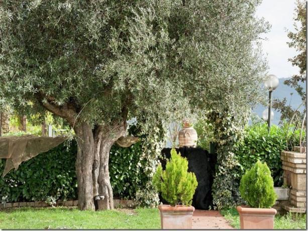 Casale Agrituristico casa-vacanze con giardino Magione-Lago-Trasimeno