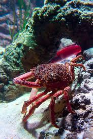 Crabfish and Jellyfish at Sealife in Jesolo