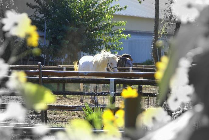 Agriturismo con animali ammessi