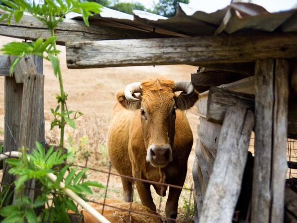 Azienda Agricola di bovini in Agriturismo Artena