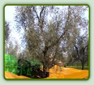 macchine-raccolta-olive