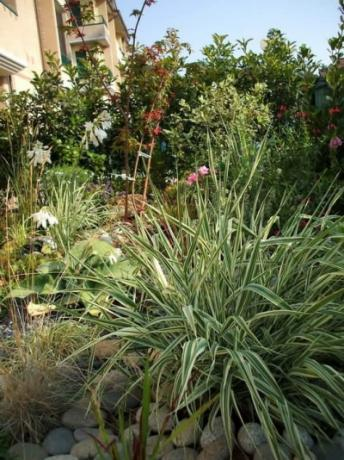 Vendita arredo giardini e interni progettazione giardini e for Progettazione giardini on line
