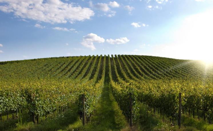 Agriturismo con produzione assaggio Vini DOC Umbria