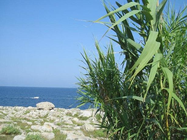 Vacanze in Salento mare e natura