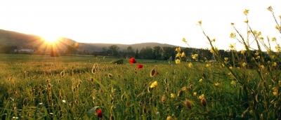 Agriturismo nel verde campagna umbra
