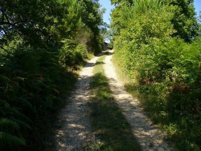 Passeggiate verdi vicino al BB a Orvieto