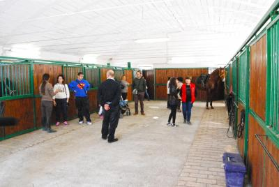 scuderia interna con 12 box centro equestre rivotorto