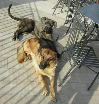 Cani agriturismo a Città della Pieve