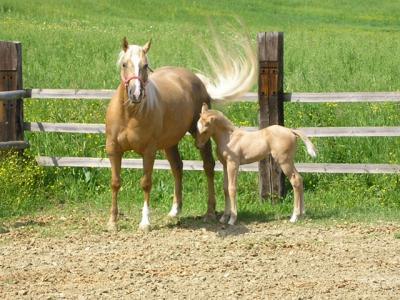 Scuola Pony a Montefalco, Umbria
