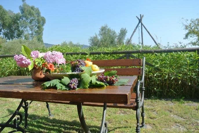 Agriturismo con Olivi a Palinuro