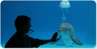 Dolphin show in Riccione