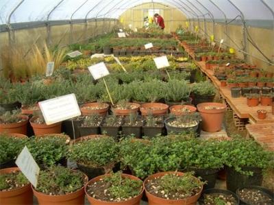 Vivaio biologico produzione e vendita piante officinali e for Vendita piante orto