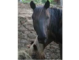 Natura a Cavallo-maneggio adiacente gestito dal proprietario