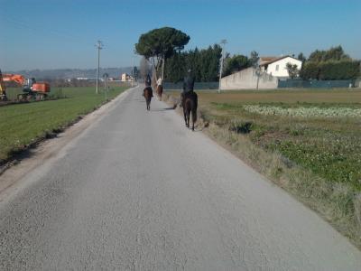 passeggiate giudate a cavallo maneggio di assisi