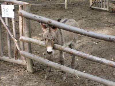 Animali al parco avventura in Valnerina
