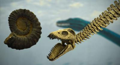 Fossili e dinosauri in Umbria
