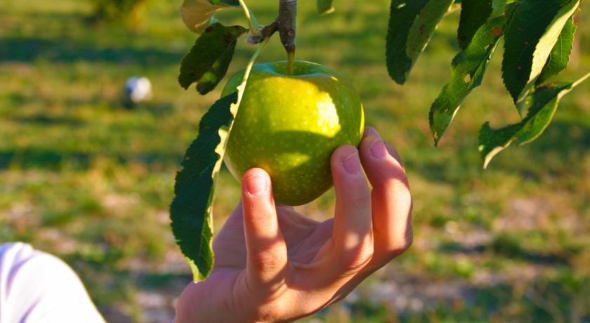 Prodotti biologici in Umbria