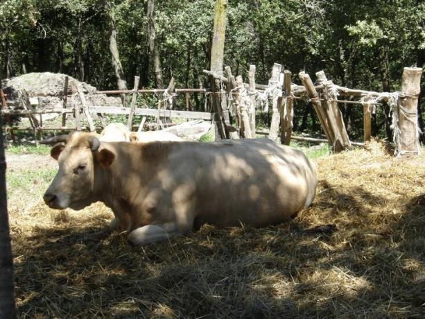 Agriturismo con Allevamento e Fattoria a Gubbio