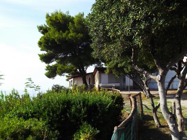 Campeggio tra ulivi secolari a Palinuro