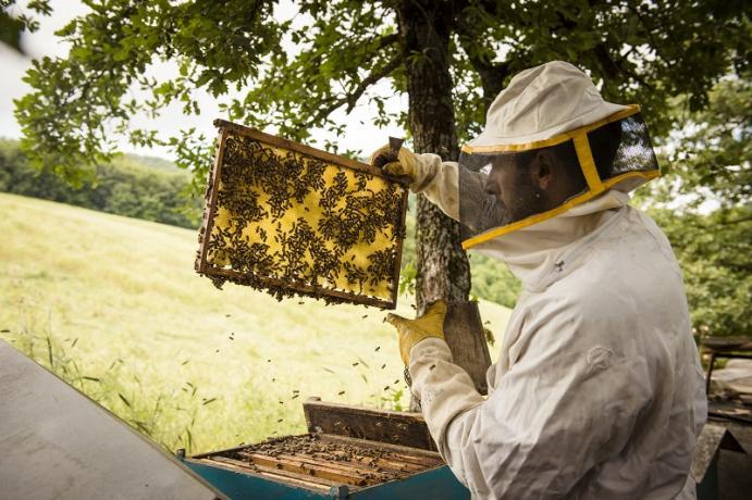 Allevamento api in Agriturismo a Gubbio